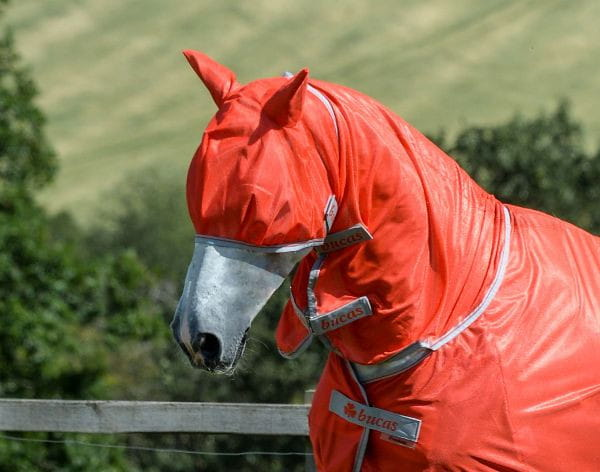 Bucas Freedom Fly Mask Edition 2021